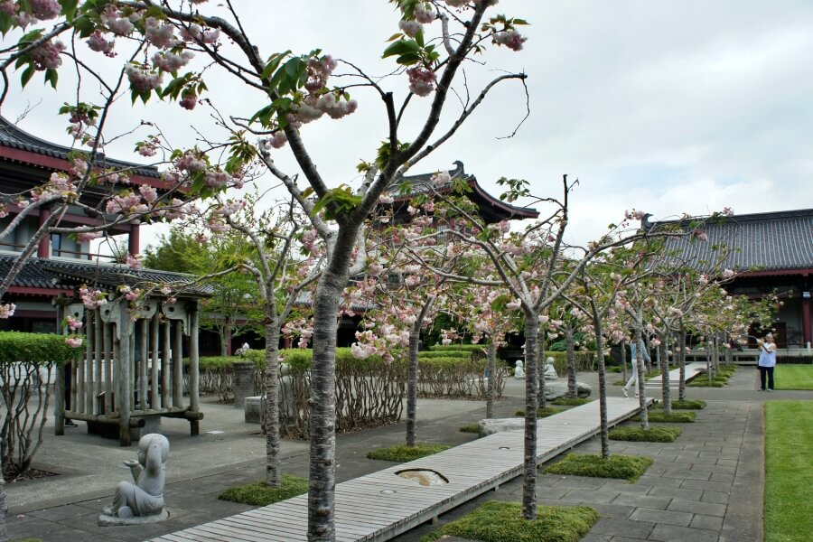 cherry blossom fo guang shan