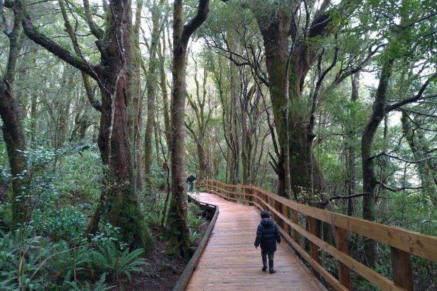 Jalan dari parkiran ke dermaga Milford Sound