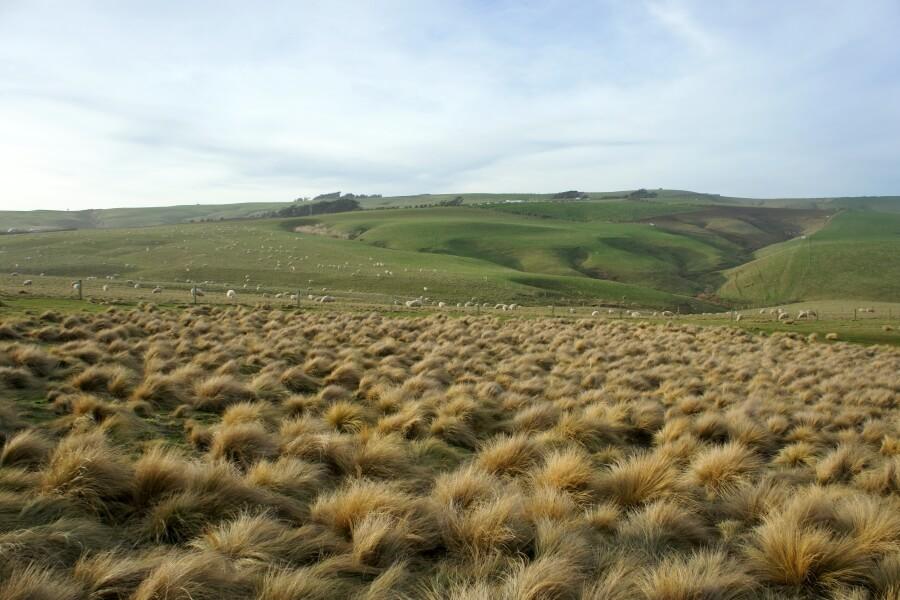 lahan luas di slope point
