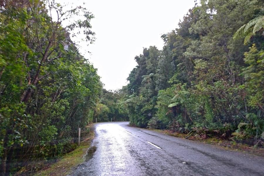 whangarei tane mahuta new zealand